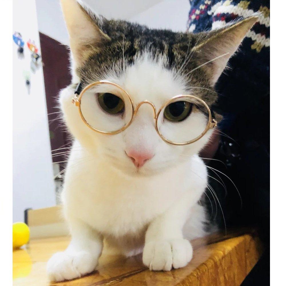 Amazon.com: Stock Show - Gafas de sol para perro, gato ...