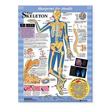 Blueprint for health your skeleton chart anatomical chart company blueprint for health your skeleton chart malvernweather Image collections