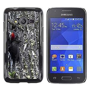hello-mobile Etui Housse Coque de Protection Cover Rigide pour // M00137133 Dirigido rojo Carpintero Woody Animal // Samsung Galaxy Ace4 / Galaxy Ace 4 LTE / SM-G313F