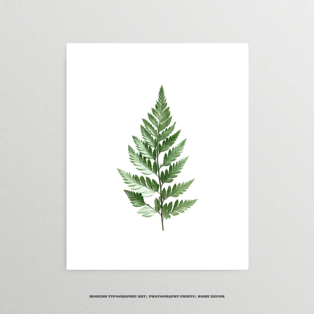 Leatherleaf Fern Print 1 Fern Plant Botanical Fern Leaf Mid-Century Modern Home Decor Forest Theme Decor Accesories Decor Wall Art
