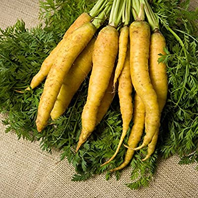 Yellow Carrot Garden Seeds - Non-GMO, Heirloom Vegetable Garden & Microgreens Seeds