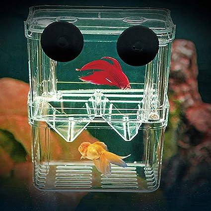 Kalaokei - Caja Protectora de plástico para Acuario con Aislamiento de cría de Peces: Amazon.es: Productos para mascotas
