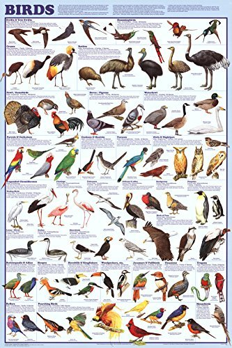Bird Large Poster - Birds Educational Science Chart Poster 24 x 36