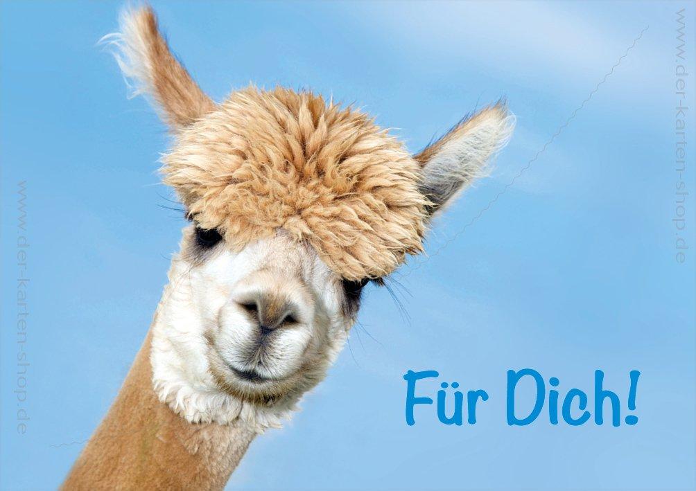 3/pezzi doppia scheda scheda biglietto Cartolina di auguri animali alpaca per te.