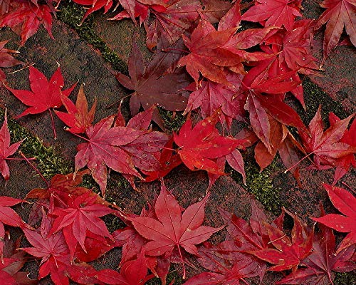 Fall Leaves on a Brick Path, Autumn Photography -