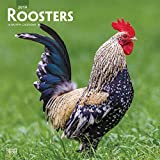 Roosters 2019 12 x 12 Inch Monthly Square Wall Calendar, Domestic Farm Barn Animals (Multilingual Edition)
