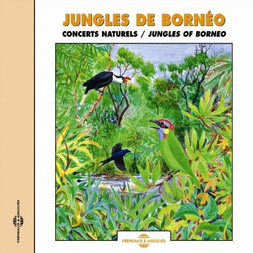 Meunier Jungle (Pic meunier (Woodpecker))