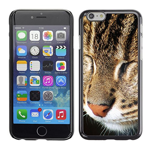 "Premio Sottile Slim Cassa Custodia Case Cover Shell // V00003830 sleepy cat // Apple iPhone 6 6S 6G 4.7"""