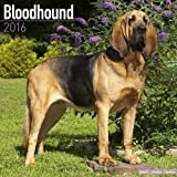 Bloodhound Calendar - Breed Specific Bloodhounds Calendar - 2016 Wall calendars - Dog Calendars - Monthly Wall Calendar by Avonside