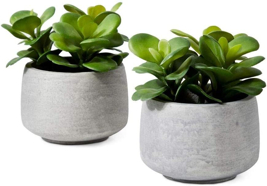 Serene Spaces Living Desert Rose in Grey Pot, Set of 2, Perfect for Weddings and Home Décor, Real Looking Succulent for Decoration, Measures 4.5in Diameter x 6.25in High