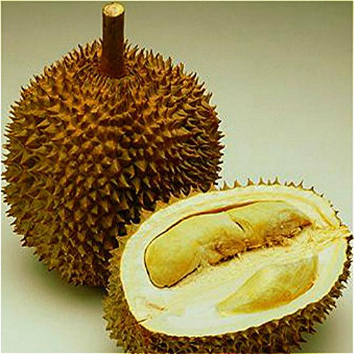 NEW Sale 20pcs A Lot Delicious Durian Seeds King Of Tropical Fruit Trees Seed Giant GARDEN Plants Bonsai Tree Sementes . Army Green