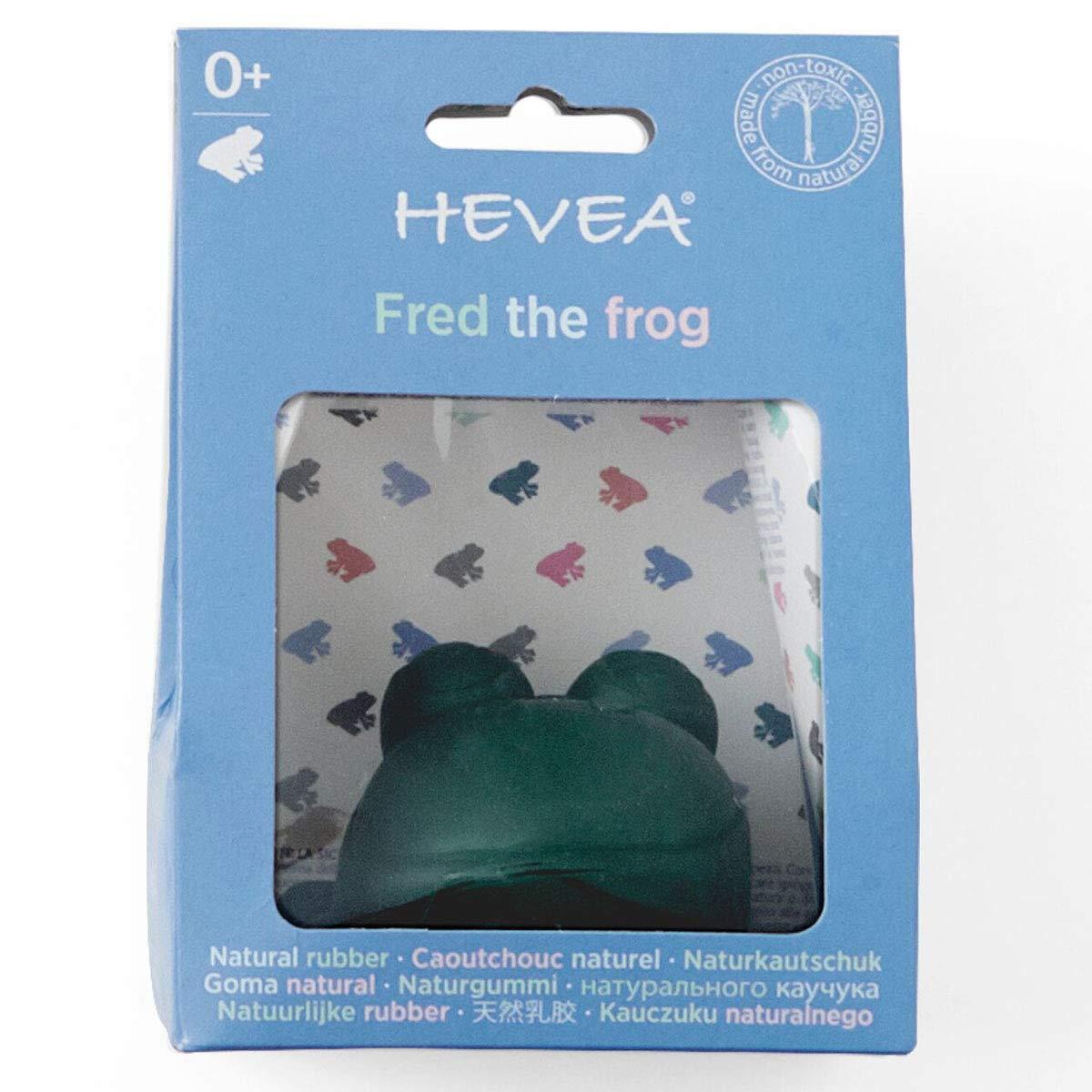 Hevea - Juguete de baño la rana verde Fred (HE344501 ...