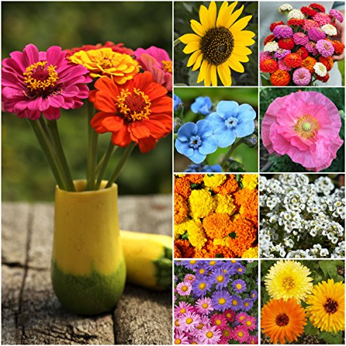 package-of-30000-seeds-annual-cut-flower-wildflower-mixture-100-pure-live-seed-open-pollinated-seeds