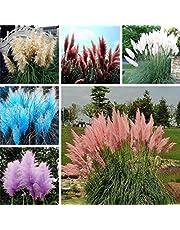 Zaden voor het planten,100 Stks/zak Pampas Gras Zaden Kruid Niet GMO Felgekleurde Bonsai Tuin Bloem Zaden voor Balkon