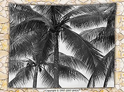 Palm Tree Decor Fleece Throw Blanket Palm Tree Silhouette Exotic Plant on Dark Thema Foliages Relax in Nature Image Throw Black