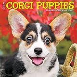 Just Corgi Puppies 2017 Wall Calendar (Dog Breed Calendars)