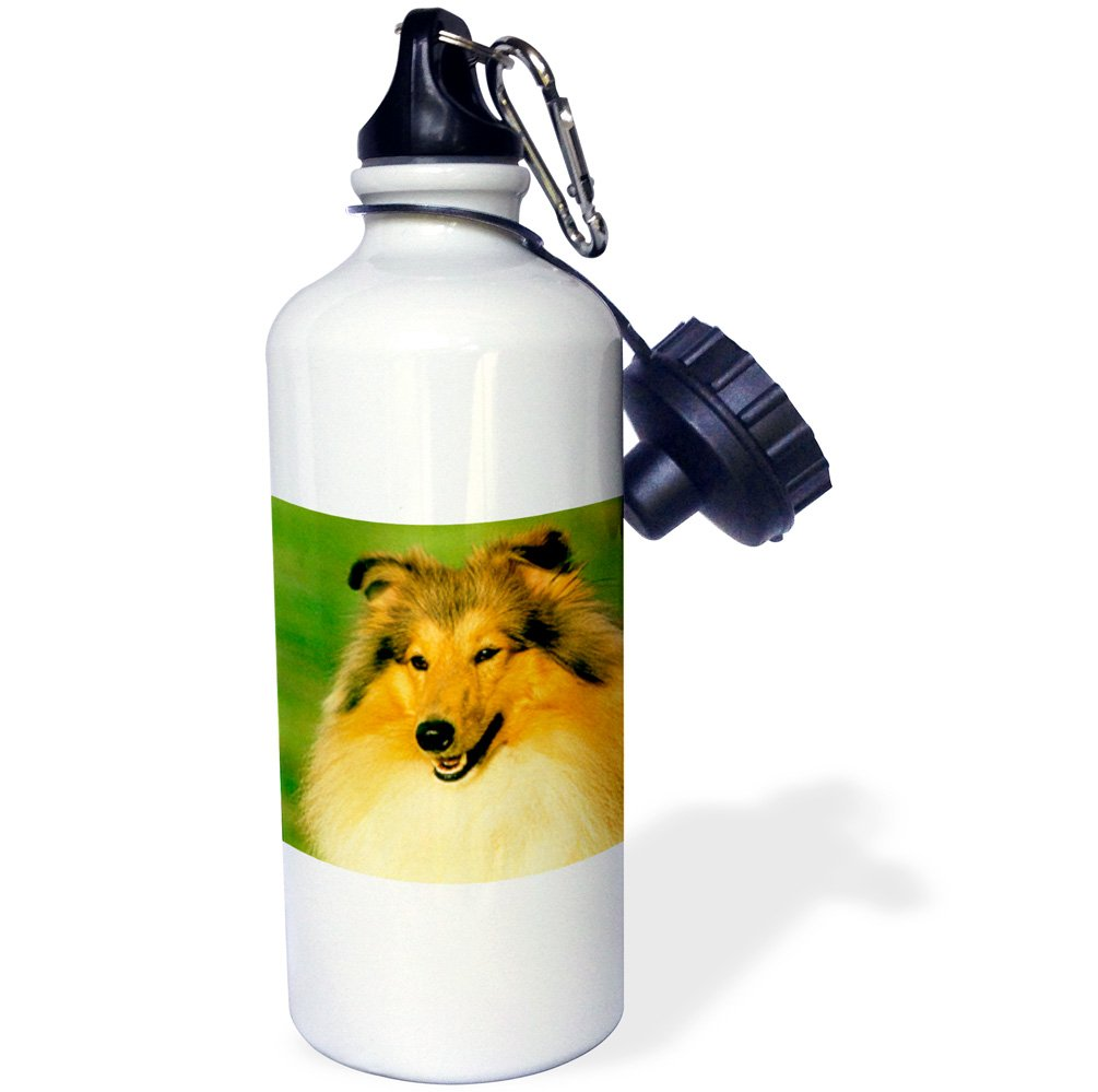 21 oz White 3dRose wb/_667/_1 Sheltie Puppy Sports Water Bottle