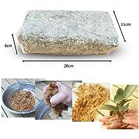 Augproveshak Musgo Sphagnum 6L, Musgo seco Natural, Musgo