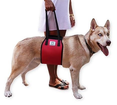 Perro ascensor apoyo arnés con mango para levantamiento de canina ...