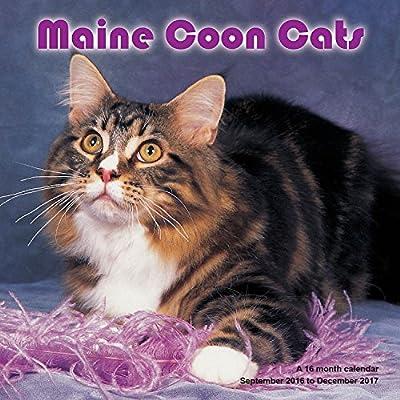 Maine Coon Cats Calendar - 2017 Wall calendars - Cat Calendar - Kitten Calendar - Monthly Wall Calendar by Magnum