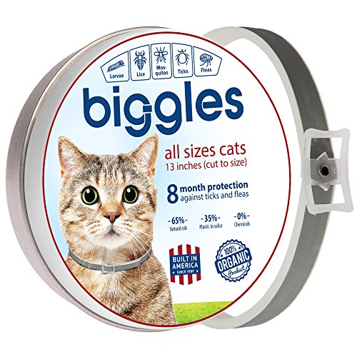 Biggles Cat collar