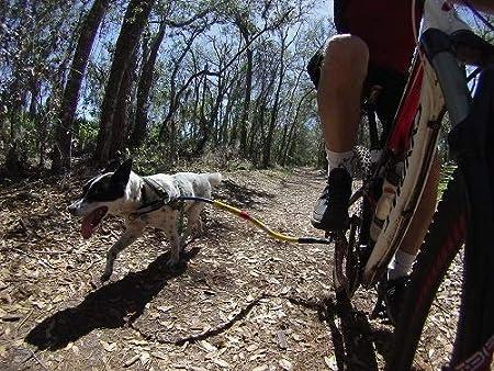 Mejor correa para bicicleta de perro – Correa para remolque de bicicleta: Amazon.es: Productos para mascotas