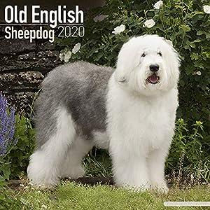 Old English Sheepdog Calendar 2020 - Dog Breed Calendar - Wall Calendar 2019-2020 1
