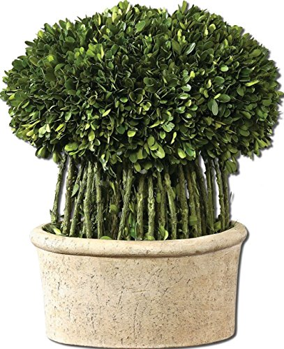 Uttermost Preserved Boxwood Globe (Green Branch Globe Topiary Pot | Preserved Boxwood Greenery European)