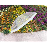 Clear Umbrella with White Accents