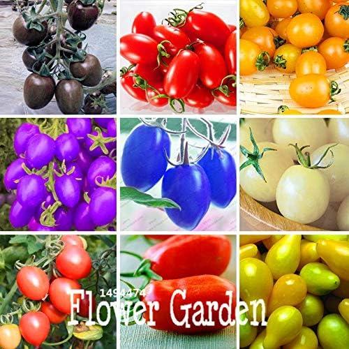 AGROBITS Promoción! 9 Tipos de Tomates Cherry Flores Frutas ...