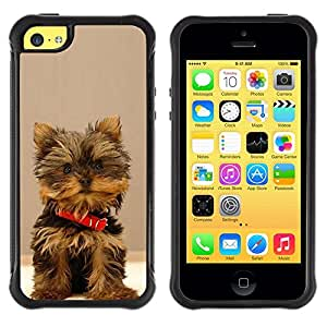 Suave TPU GEL Carcasa Funda Silicona Blando Estuche Caso de protección (para) Apple Iphone 5C / CECELL Phone case / / Yorkshire Terrier Dog Small Brown Furry /