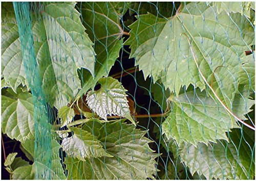 Anti Bird Net Netting Tree Plant Fruit Protection Diamond Mesh 4m Wide 100m Long by Bradas