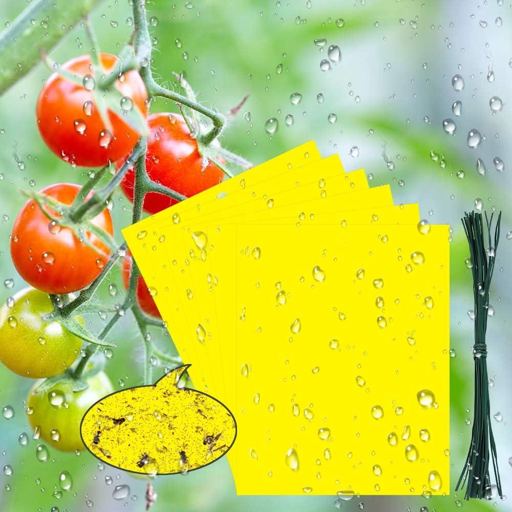BUZIFU 30pcs Trampas para Insectos Trampas Pegajosas de Doble Cara con Bridas de 20 cm,Papeles Pegajosos Amarillos Trampas de Moscas, Ideal para Proteger de Huertos y Plantas Ornamentales(19,5X 15 cm)