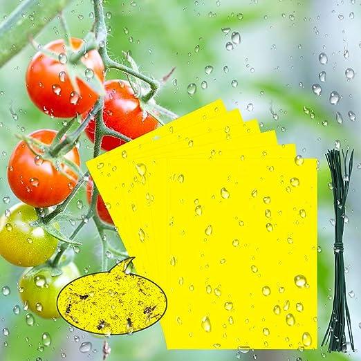 BUZIFU 30pcs Trampas para Insectos Trampas Pegajosas de Doble Cara ...