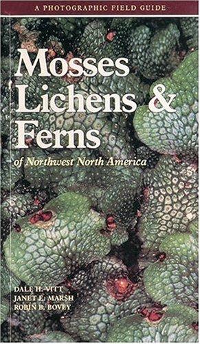 lichens of north america pdf
