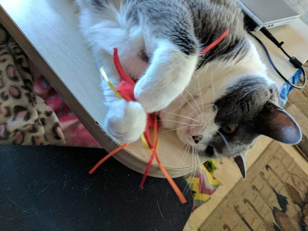 Kitten Toys Stuffed Cat Toys Stars Cat Toys Celestial Cat Toy Optional Catnip Ribbon Cat Toy