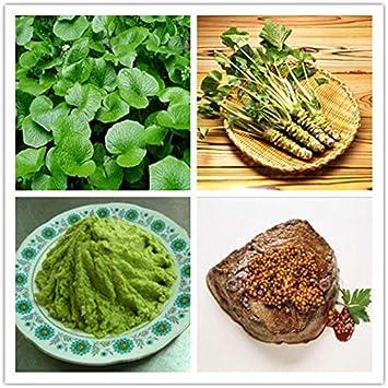 Delivery 200PCS Wasabi Seeds Japanese Horseradish Seed Vegetable