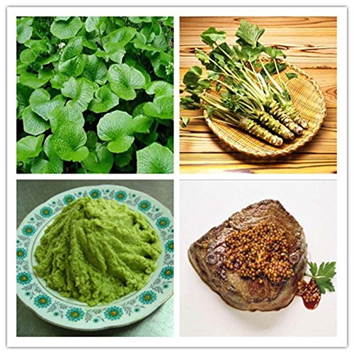 New 100 pcs Wasabi Seeds Japanese Horseradish Seed - Usa Destiny New Stores