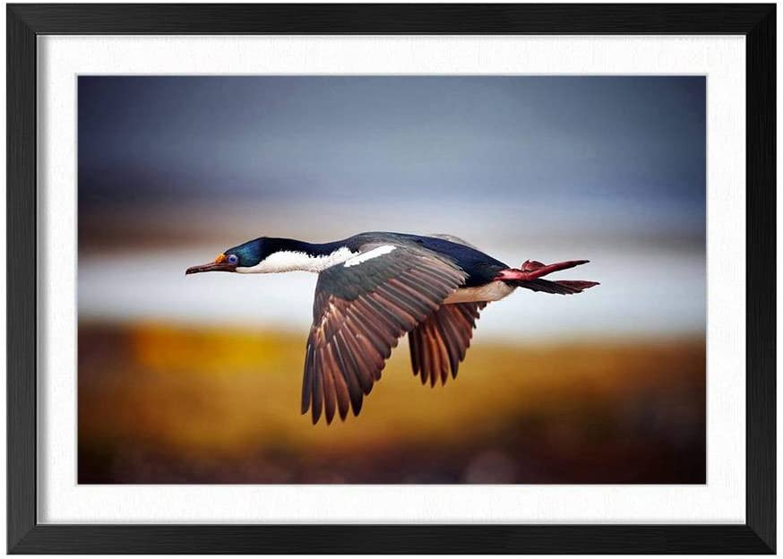 Wild Duck Flying In The Sky Black Frame Art Print Poster, Home Wall Decor(16x24 inch)