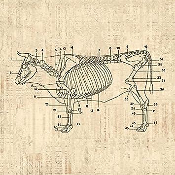 614Ys FXQPL._SY355_ amazon com cow diagram print cow skeleton farm animal wall art