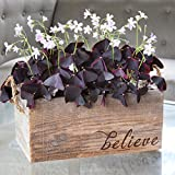 Oxalis Triangularis in Reclaimed Wood Planter with Believe – Pre Planted Oxalis Tubers – Grows in 6-8 Weeks Review