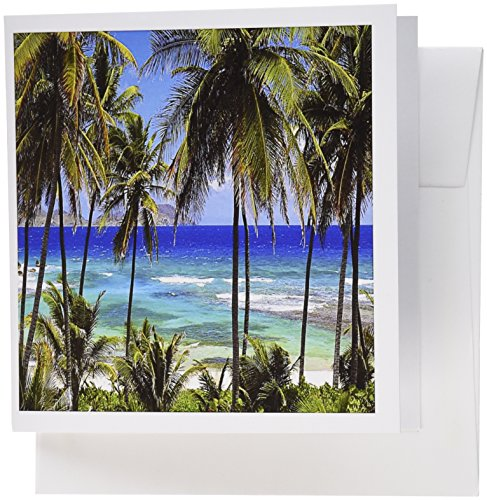 3dRose Tropical Day Scene with Swaying Palm Trees and Glimpses of Blue Ocean - Greeting Cards, 6 x 6 inches, set of 6 (gc_173296_1)