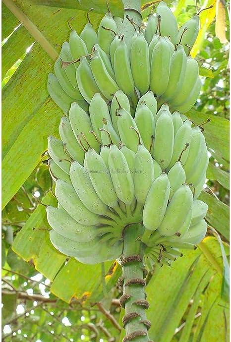 バナナ アイス クリーム