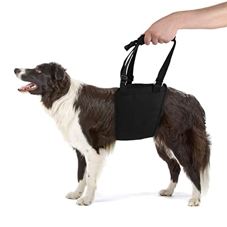Lylyzoo - Arnés para perro con correa para patas traseras, correas ...