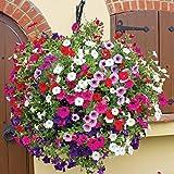 Creative Farmer Petunia Hanging Mix Flower Seeds