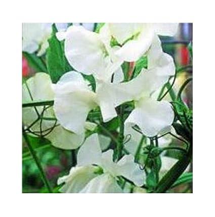 Honsel-Leuchten Elegante Tischlampe Glasschirm alabaster weiß Fuß rostfarbig