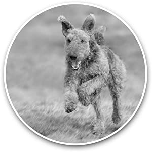 Vinyl Stickers (Set of 2) 15cm Black & White - Airedale Terrier Dog Puppy Laptop Luggage Tablet #35229