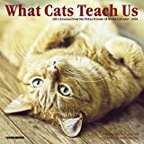 What Cats Teach Us 2018 Calendar: Life s Lessons from Our Feline Friends