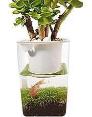 Fish Bowls Desktop Mini Fish Tank Fish Vegetables Symbiotic Water Grass Ultra-White Ecological Plastic Convenient Fish Tank Grows Plants