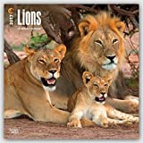 Lions 2017 Calendar